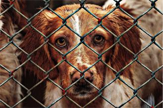 Keine Toleranz bei Tierschutzverstößen!